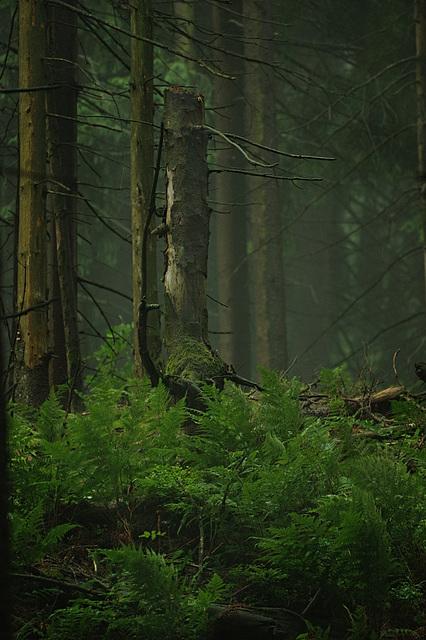 Wieder: Regenwald (2)