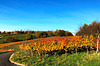 Herbstliche Weinberge bei Bad Neuenahr