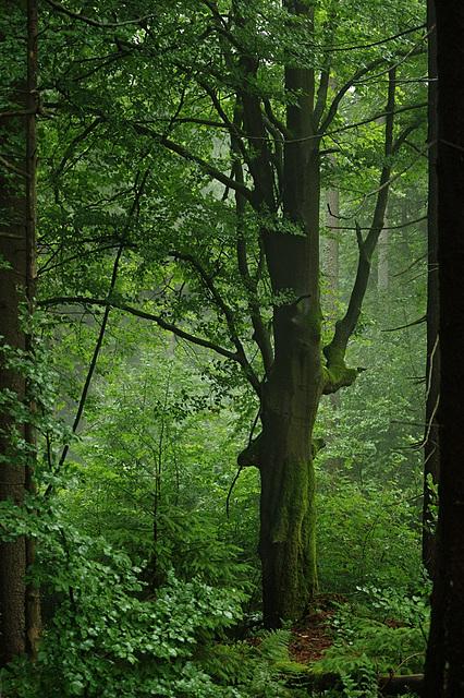 Wieder: Regenwald (3)