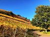 Herbstliche Weinberge bei Marienthal