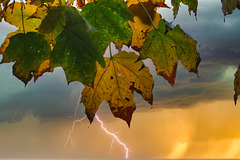 1 (25)...bad weather and leaves