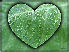La pluie cesse, et il en reste, un instant, une poussière de diamants minuscules, comme si, de là-haut, on secouait des miettes d'une grande nappe azurée.