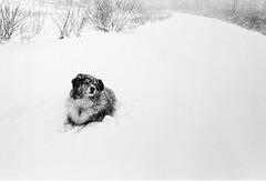 Gumbo in the snow