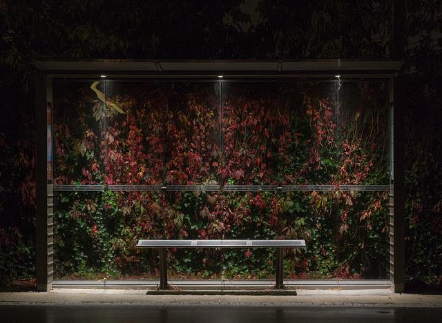 Photo de nuit : un banc public