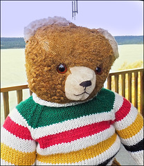 Bear in Hudson Bay Colours