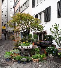 Zurigo fiorita