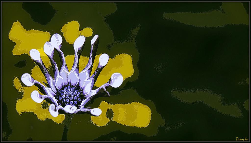 Portrait de fleurs (visions graphiques) 40803344.fe74beff.1024