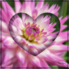 Les fleurs ne nous laissent jamais tomber. Elles nous accompagnent dans le bonheur et nous soutiennent dans le malheur.  Céline Blondeau