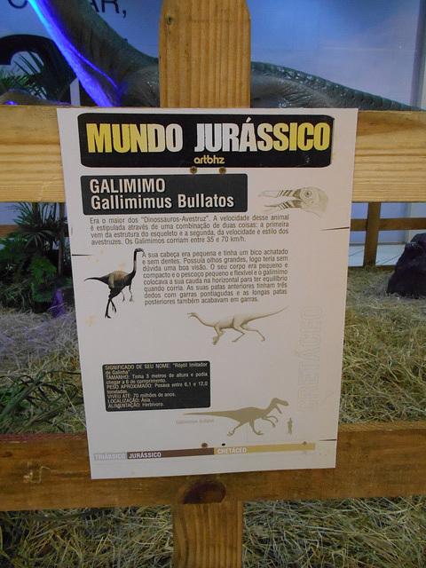 DSCN2836 - Gallimimus bullatos, Ornithomimidae Theropoda