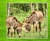 Schöne Eselei... Beautiful donkeys... ©UdoSm