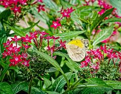 9260794 DxOdcL3 · Butterfly