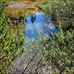 Mini lago di alta montagna - (448)