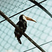 Toucan taken through the wires - London Zoo, 1980
