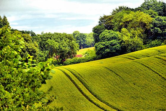 Downton Farmland