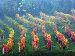 autumnal fence