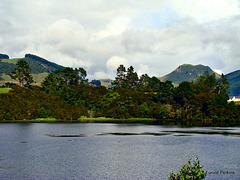 Tree-Lined Lakeside.