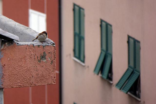 Cip Cip dal balcone