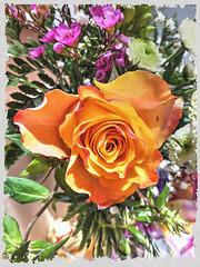 Yellow Monday Rose.  ©UdoSm