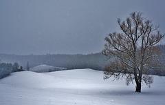 Schneesturm - Snow Storm - please enlarge!