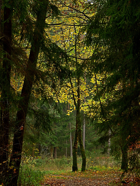 lovers in the wood......PiPs!