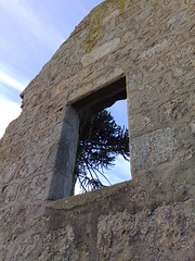 Monkey puzzle window