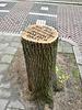 Dordrecht 2018 – Protest about a cut tree