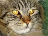 Eye's of the tiger (Ilyich)