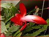 Cactus pasquale : macro (840)