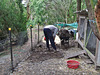 Ad mucking out the duck pen