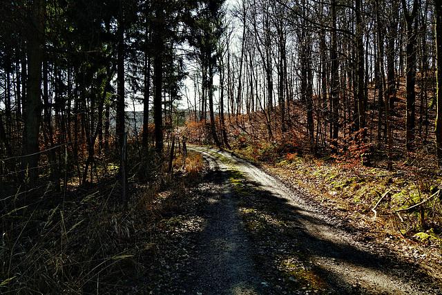 Waldeslust - Fascination of forest