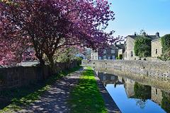 Canalside scene