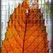 HFF aux couleurs d'automne