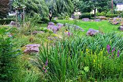 Steingarten und Feuchtbiotop im Kurpark  Schierke