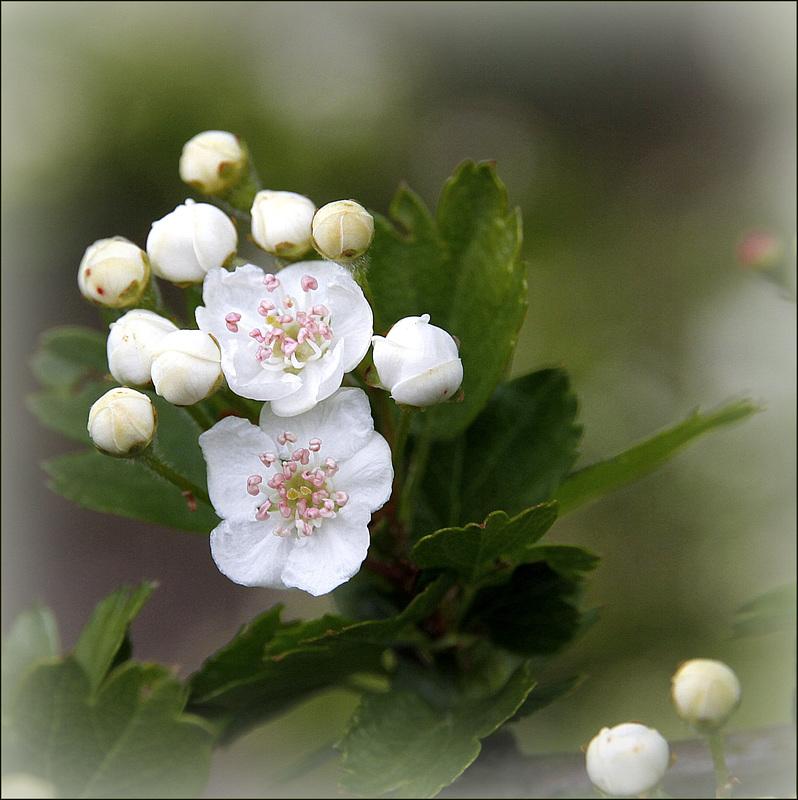 Une fleur par jour.... - Page 6 41773378.892367f5.800