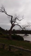 Arbre à bras / Uma árvore e seus braços