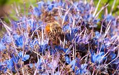 Bee shapeshifter