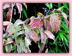 Lovely Leaves.