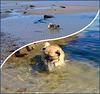 Un air de vacances ...........Karl à la plage ♥