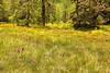 Knabenkräuterwiese am entlang des Wanderweges rund um den Stoaner Mandl