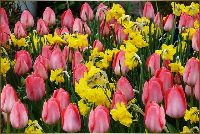spring is back ☼