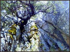 Heroic oak