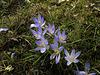 spring not so far