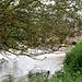 Le ru d'Ancoeur au pont des Trayants