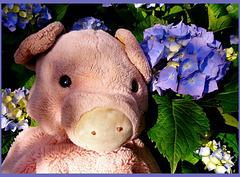 The 50 Images-Project: Doudou est fleur bleue !