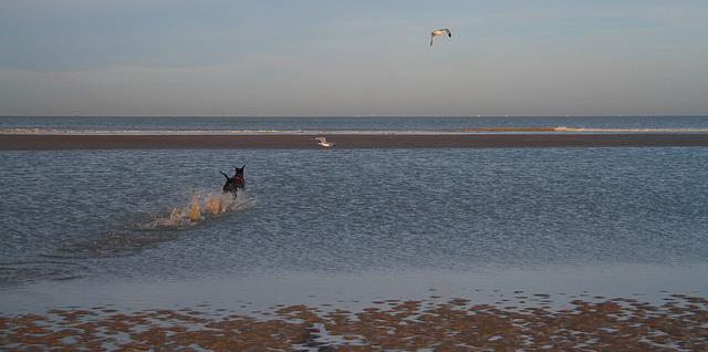 Nala découvre la mer ,les vagues ,les mouettes .............