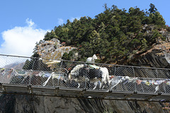 Khumbu, Yak on the Suspension Bridge