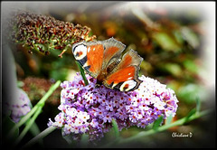Les petits cadeaux de la nature ... ***   Nature's little gifts ...
