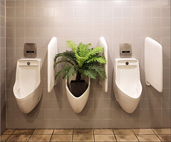 Floral Corona spacing measures at the pee stand. Pee watering not desired.  ;-)  (PiP)