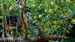 Do Cats Like Apples?