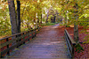 Bridge to the Fairytale Forest...
